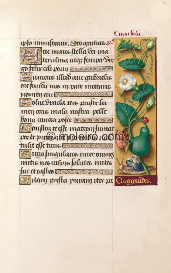 f. 81r, K&uuml;rbis, Die Grandes Heures der Anna von der Bretagne