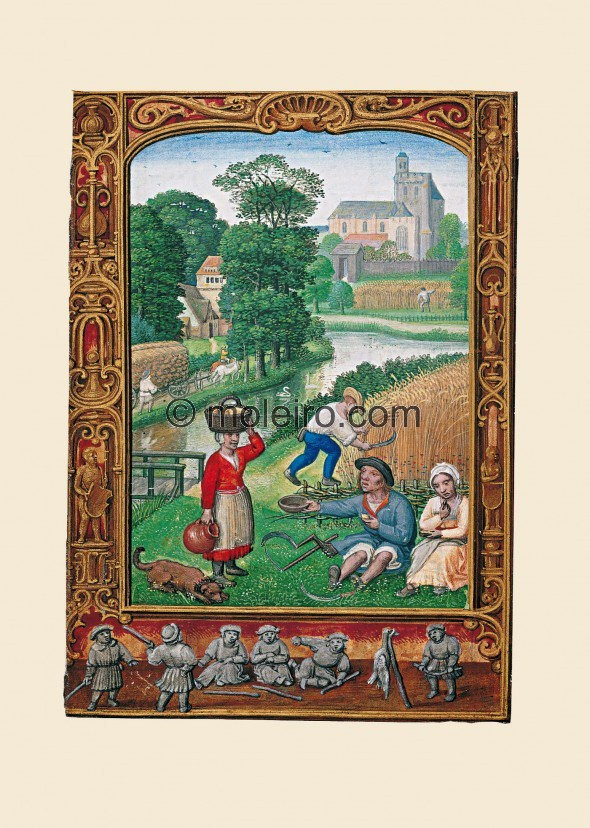 f. 25v, August, harvest. The painting shows different aspects of peasant occupations in the month of August. Several peasants ar...