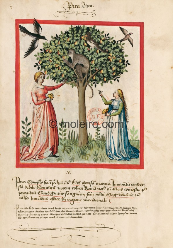 f. 3v, Pears. Pears. Nature: cold in the first degree, wet in the second. Optimum: fragrant and ripe. Benefit: they soothe weak ...