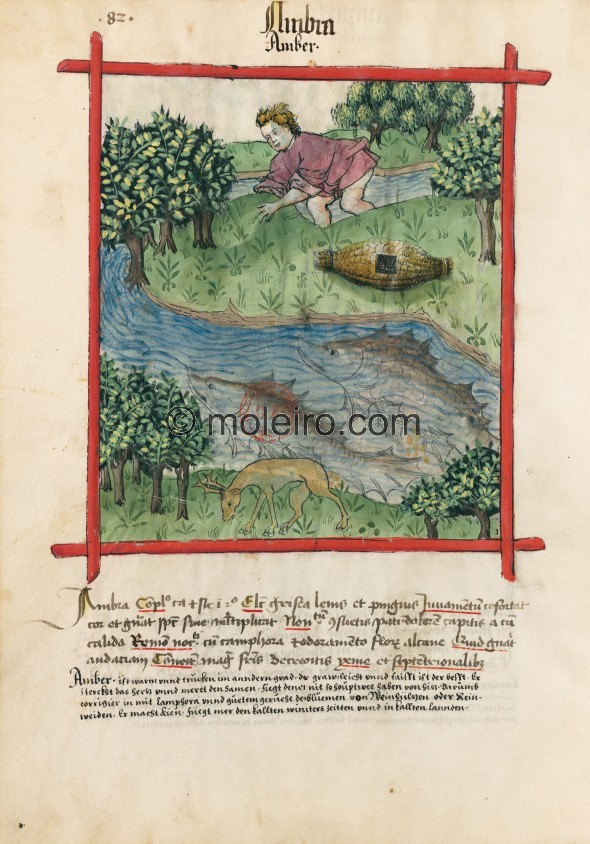 f. 82v, Bernstein. Ambergris. Nature: hot and dry in the second degree. Optimum: grey, light and greasy. Benefit: it strengthens...