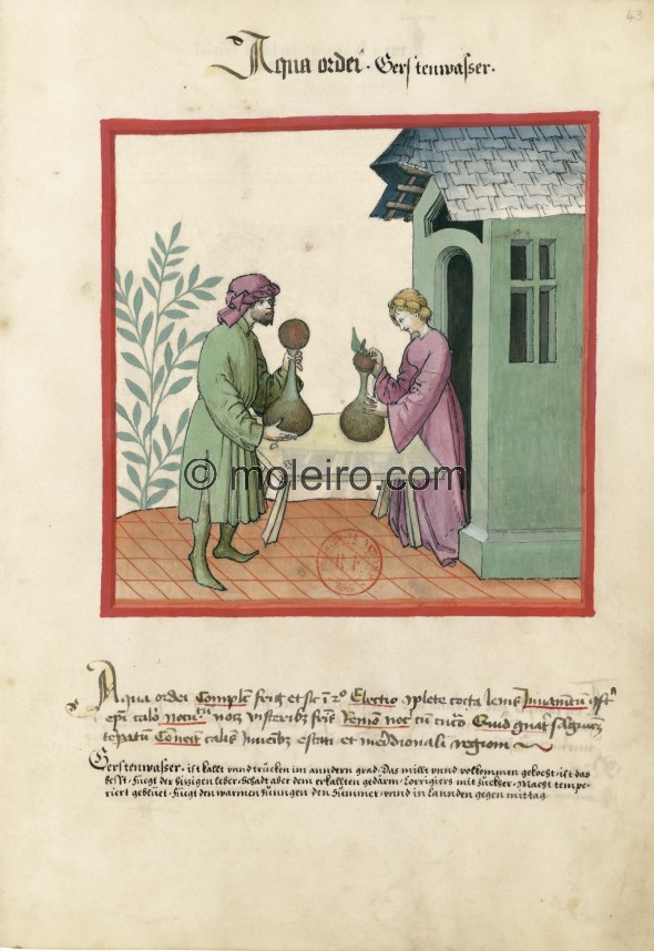 f. 43r, Gerstenwasser. Barley water. Nature: cold and dry in the second degree. Optimum: completely boiled, light. Benefit: usef...