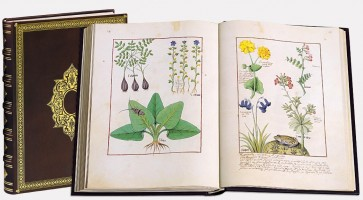 The Book of Simple Medicines
